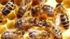 (VIDEO) Un roi de peste 20 de milioane de albine a scapat dintr-un camion pe o autostradă din SUA, după un accident