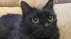 O pisică a demonstrat că felinele pot avea mai multe vieţi