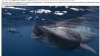 Un scafandru american a murit sfâşiat de un rechin