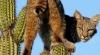 O pisică s-a refugiat în vârful unui cactus de şase metri înălţime