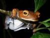 Galeria celor mai ciudate animale descoperite în 2011 a fost prezentată cu ocazia Halloween-ului FOTO