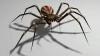 ÎNFRICOȘĂTOR! Un medic din China a descoperit un păianjen care îşi făcuse cuib în urechea unui bărbat