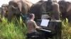 (VIDEO) Concert de Beethoven pentru elefanţii orbi din Thailanda