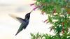 Ce au în comun păsările colibri şi câinii VIDEO