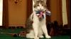 """Cea mai populară pisică din Marea Britanie ar putea fi concediată pentru că """"nu-şi face treaba"""""""