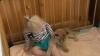 Cea mai iubită jucărie a unei fetiţe din Australia: Un leu viu