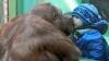 Cum se leagă prietenia dintre un copil şi un urangutan FOTO