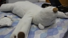 Ai parte de un somn liniştit: A fost inventat ursul-robot anti-sforăit VIDEO