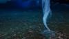 """""""Ţurţurele morţii"""" ucide tot ce-i iese în cale (VIDEO)"""