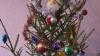 Vise împlinite! Copiii din patru familii au primit brazi decoraţi de telespectatorii Publika TV