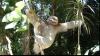 Cel mai drăguţ loc din lume: creşa pentru leneşi (VIDEO)