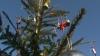 Doi brazi din curtea Publika TV, ce vor ajunge la copiii care nu au un pom de Crăciun, au fost decoraţi azi