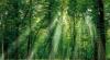 Terra a pierdut 10 hectare de pădure pe minut în ultimii 15 ani