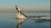 Cum să devii un om-delfin (VIDEO)