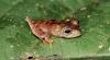 În junglele din Surinam au fost descoperite 46 noi specii de animale