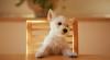 Studiu: Adoptarea unui câine poate fi benefică pentru sănătatea omului