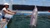 Surprinzător: Delfinii ştiu limbi străine