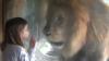 Cum reacţionează un leu enervat de o fetiţă (VIDEO)