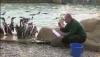 Veselie mare la Grădina Zoologică din Londra. Vietăţile se distrează pe seama îngrijitorilor VIDEO