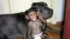 Un pui de cimpanzeu, adoptat de un câine FOTO