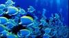 Studiu: Nivelul ridicat de bioxid de carbon din oceane afectează sistemul nervos al peştilor