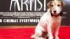 """După ce a devenit faimos pentru rolul său în filmul """"The Artist"""", căţelul Uggie se pensionează"""