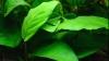 """Plantele sunt capabile să """"vorbească"""""""
