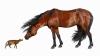 VEZI când au trăit caii de dimensiunea unei pisici