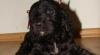 Prinţul William şi Kate au adoptat un căţel