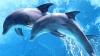 Carta drepturilor fundamentale pentru delfini