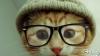 Pisicile care au inspirat fonturile de computer FOTO