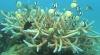 """""""Google Street View"""": O fereastră unică spre lumea subacvatică"""
