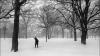 Lecţii amânate din cauza ninsorilor: 248 de şcoli din întreaga ţară sunt închise VEZI LISTA