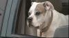 Un câine şi-a împuşcat stăpânul cu arma de vânătoare