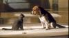 Cum se calculează CORECT vârsta câinelui sau a pisicii tale