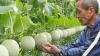 Unde se vând cele mai scumpe fructe din lume