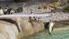 Cum se distrează pinguinii din Londra FOTO