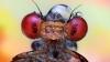 Uimitoarea lume a insectelor, văzută de aproape (FOTO)