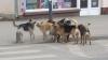 În doi ani, în Moldova ar putea fi construit un azil modern pentru câinii vagabonzi