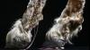 Cei mai ciudaţi pantofi din lume? Sunt făcuţi din animale împăiate (FOTO)