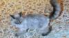 Pisica prezidenţială Dorofei nu a dispărut! Medvedev a confirmat vestea pe Twitter