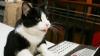 Cum ţine o pisică ritmul unei melodii a Rihanei VIDEO
