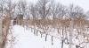 Fermierii din Moldova au utilizat ilegal peste un milion de lei din fondul de subvenţionare