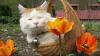 Cele mai leneşe animale din lume, în imagini haioase (FOTO)