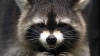 """""""La ce te uiţi?"""" Cele mai rele priviri ale animalelor de companie (FOTO)"""