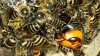 """Albinele japoneze îşi """"prăjesc"""" inamicii"""