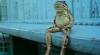 Cum se relaxează o broască pe o bancă (VIDEO)