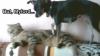 Nu sunt mereu la cuţite: Un câine îi face masaj unei pisici VIDEO