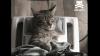 Cum se relaxează pisicile? VIDEO