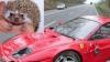 Şi-a făcut praf Ferrari-ul de dragul unui arici FOTO